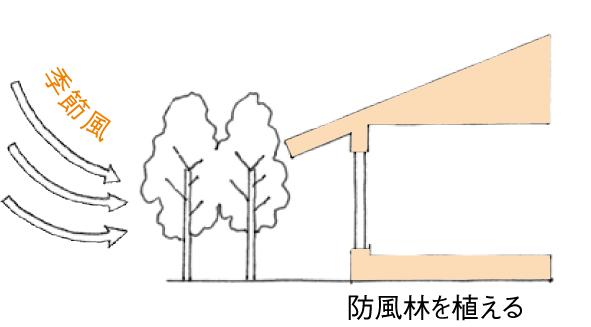 防風林を植える